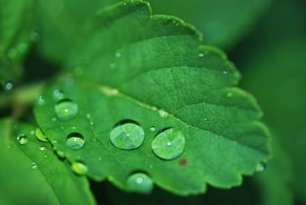 eau-2Bfeuille-2Bchlorophylle2