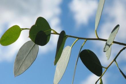 leaf-1770_640