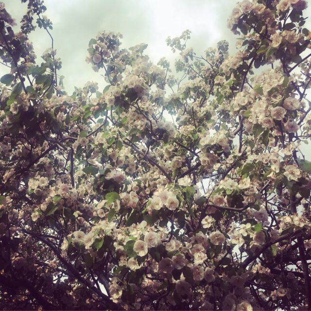 La beaut de la nature au printemps toujours aussi saisissante!hellip
